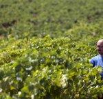 https://www.tp24.it/immagini_articoli/25-12-2017/1514194319-0-vini-sicilia-raccoglie-lappello-barracosi-vini-ossidativi-tipici-marsalesi.jpg