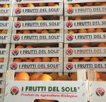 https://www.tp24.it/immagini_articoli/26-02-2018/1519632815-0-lazienda-marsalese-frutti-sole-sbarca-mondo-dellecommerce.jpg