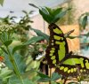 https://www.tp24.it/immagini_articoli/26-02-2020/1582731844-0-venerdi-marsala-apre-casa-farfalle.jpg