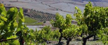 https://www.tp24.it/immagini_articoli/26-03-2020/1585240618-0-crisi-coronavirus-quali-aiuti-imprese-lavoratori-agricoli.png
