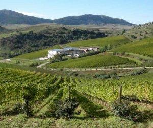 https://www.tp24.it/immagini_articoli/26-05-2018/1527354321-0-cantine-aperte-sentieri-buon-vino-siciliano.jpg
