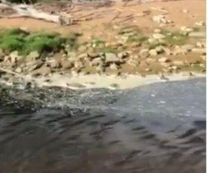 https://www.tp24.it/immagini_articoli/26-05-2020/1590525493-0-castelvetrano-inquinamento-al-fiume-modione-legambiente-fare-nbsp-analisi-e-controllare-scarichi-illeciti.jpg