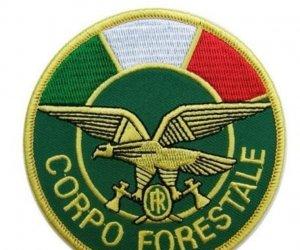 https://www.tp24.it/immagini_articoli/26-07-2020/1595719177-0-trapani-campagna-nazionale-del-partito-della-rifondazione-comunista-restituiteci-il-corpo-forestale.jpg