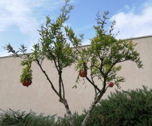 https://www.tp24.it/immagini_articoli/26-10-2020/1603707882-0-marsala-celebrata-nbsp-la-xii-giornata-nazionale-avo-piantato-nbsp-un-nbsp-melograno-all-ingresso-dell-ospedale-nbsp.jpg