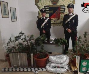 https://www.tp24.it/immagini_articoli/26-11-2019/1574758222-0-serra-marijuana-casa-arrestati-ragazzi-petrosino.jpg
