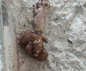 https://www.tp24.it/immagini_articoli/27-02-2018/1519724590-0-valderice-cuccioli-randagi-sono-morti-vigili-urbani-hanno-fatto-nulla.jpg