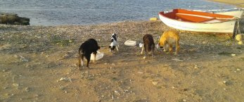 https://www.tp24.it/immagini_articoli/27-03-2020/1585331994-0-petrosino-volontari-prendono-cura-cani-quartiere-sanificazione-citta.jpg