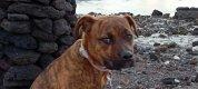 https://www.tp24.it/immagini_articoli/27-04-2021/1619499511-0-il-cane-contesto-di-pantelleria-e-a-milano-scatta-la-querela-nbsp.png