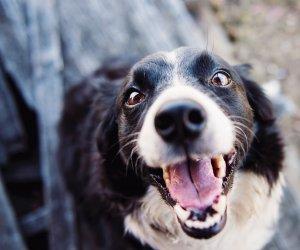 https://www.tp24.it/immagini_articoli/27-05-2019/1558977702-0-amici-animali-consigli-unalimentazione-corretta-capire-etichette-nutrizionali.jpg