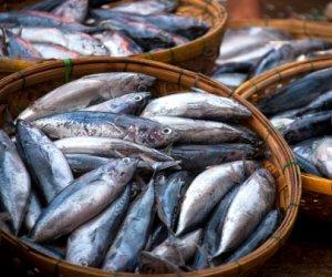 https://www.tp24.it/immagini_articoli/27-06-2014/1403822570-0-politici-manager-funzionari-cosi-hanno-fatto-sparire-28-mln-destinati-ai-pescatori.jpg