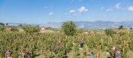 https://www.tp24.it/immagini_articoli/27-10-2021/1635325161-0-vini-firriato-e-azienda-del-vino-sostenibile-per-equalitas.jpg