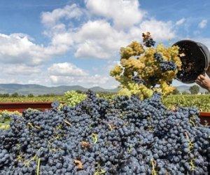 https://www.tp24.it/immagini_articoli/28-02-2018/1519807565-0-contributi-promozione-vino-allestero-250000-euro-pellegrino-mothia.jpg