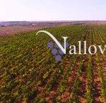 https://www.tp24.it/immagini_articoli/28-04-2018/1524951812-0-mazara-vino-zucchero-indagato-pietro-forace-vallovin.jpg