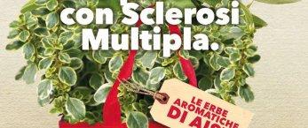 https://www.tp24.it/immagini_articoli/28-05-2020/1590649003-0-anche-a-trapani-le-erbe-aromatiche-di-aism-per-la-lotta-alla-sclerosi-multipla.jpg