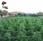 https://www.tp24.it/immagini_articoli/28-07-2018/1532768780-0-giardino-marsala-sono-state-scoperte-piante-marijuana-arrestato-uomo.jpg