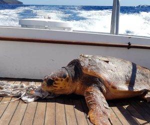 https://www.tp24.it/immagini_articoli/28-09-2019/1569694134-0-pantelleria-tartaruga-difficolta-soccorsa-guardia-costiera.jpg