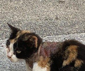 https://www.tp24.it/immagini_articoli/28-10-2019/1572279993-0-gatto-ferito-gatti-trapani.jpg