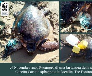 https://www.tp24.it/immagini_articoli/28-11-2019/1574930315-0-salvata-tartaruga-spiaggia-fontane.jpg