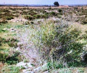 https://www.tp24.it/immagini_articoli/28-11-2019/1574944011-0-mazara-progetto-larea-contrada-affacciata-ammesso-bando-rete-natura-2000.jpg