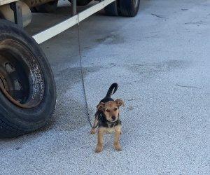https://www.tp24.it/immagini_articoli/28-12-2019/1577557689-0-trapani-cagnolino-legato-catena-ruota-unauto-lasciato-senza-cibo.jpg