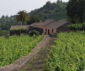 https://www.tp24.it/immagini_articoli/29-01-2017/1485682898-0-soldi-per-l-agricoltura-dall-unione-europea-e-il-psr-la-spesa-della-sicilia-e-nella-media.jpg