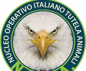 https://www.tp24.it/immagini_articoli/30-04-2016/1462030662-0-e--nato-a-trapani-il-nucleo-operativo-italiano-tutela-animali.jpg