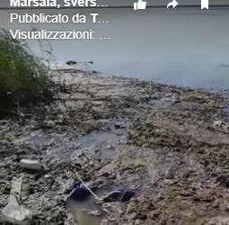 https://www.tp24.it/immagini_articoli/30-04-2019/1556654467-0-marsala-sversamento-liquami-mare-salinella.jpg