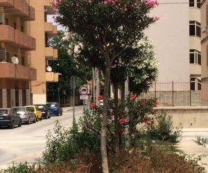 https://www.tp24.it/immagini_articoli/30-06-2018/1530363164-0-marsala-verde-pubblico-trascurato-piazza-marconi.jpg
