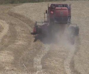 https://www.tp24.it/immagini_articoli/30-06-2019/1561927725-0-crisi-grano-colpisce-agricoltori-valle-belice.jpg