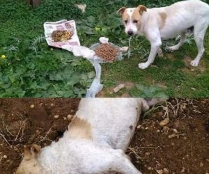 https://www.tp24.it/immagini_articoli/30-07-2019/1564488328-0-mazara-decine-cani-avvelenati-citta.jpg