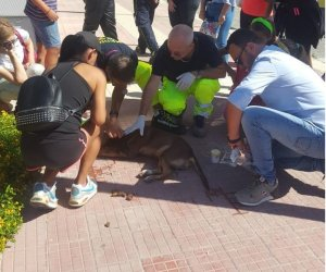 https://www.tp24.it/immagini_articoli/30-09-2019/1569864901-0-cani-investiti-uccisi-marsala-caccia-killer-qualcosa-funzionato.jpg