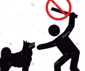 https://www.tp24.it/immagini_articoli/30-09-2020/1601480747-0-randagismo-intollerabile-in-sicilia-nbsp-la-denuncia-del-movimento-stop-animal-crimes-italia-nbsp.jpg