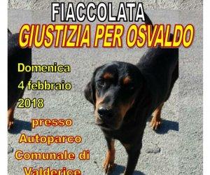 https://www.tp24.it/immagini_articoli/31-01-2018/1517411777-0-osvaldo-cane-randagio-valderice-crudelmente-bastonato-morte.jpg