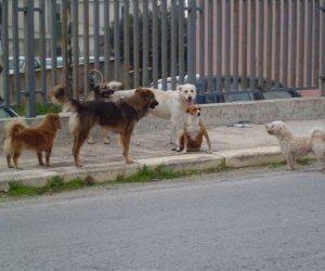 https://www.tp24.it/immagini_articoli/31-03-2015/1427781201-0-l-enpa-di-castelvetrano-ha-seguito-i-cani-dalla-sicilia-al-nord-italia.jpg