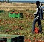 https://www.tp24.it/immagini_articoli/31-07-2018/1533020819-0-sicilia-ragazzini-sfruttati-euro-giorno-poco-cibo-otto-indagati.jpg