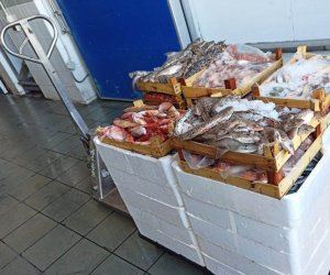 https://www.tp24.it/immagini_articoli/31-07-2020/1596174320-0-mazara-sequestrati-oltre-230-chili-di-pesce-abusivo-nbsp.jpg