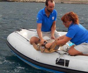 https://www.tp24.it/immagini_articoli/31-08-2016/1472678934-0-a-marettimo-torna-in-liberta-la-tartaruga-achille.jpg