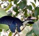 https://www.tp24.it/immagini_eventi/1582733216-1-casa-farfalle.jpg