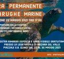 https://www.tp24.it/immagini_eventi/1621419627-mostra-permanente-tartarughe-marine.jpg