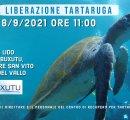 https://www.tp24.it/immagini_eventi/1630781770-liberazione-in-mare-tartaruga.jpg